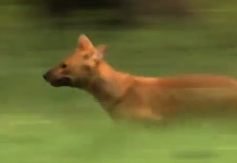 wild-dogs-documentary