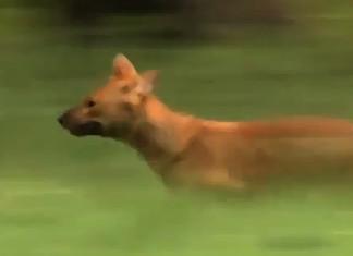 wild-dogs-documentary