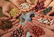 list of seed banks in india