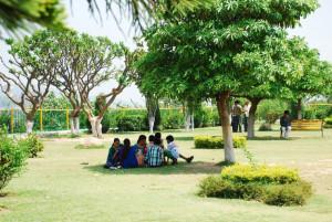 Indian Summeri - tree shade