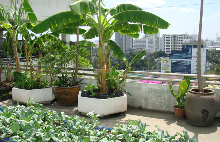 Start a refreshing rooftop kitchen garden for Terrace garden in india