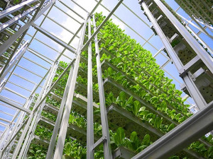 vertical-farming-4