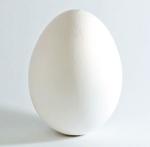 Egg-Anda