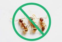 Natural-Pest-Control-Methods