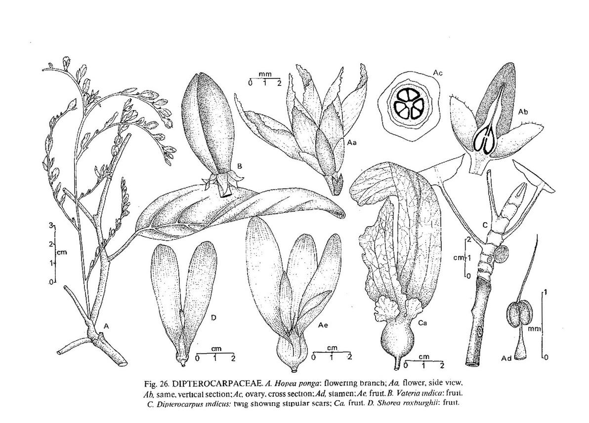 Herbarium-Preserving-our-Rich-Biodiversity-2