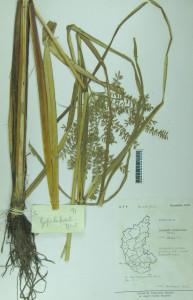 Herbarium-Preserving-our-Rich-Biodiversity-3