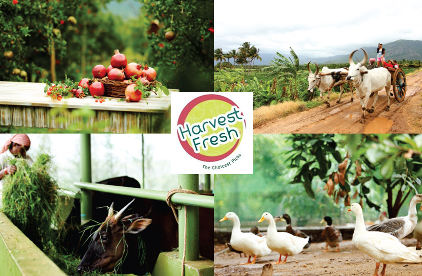 Eco-tourism_Comapany_in_India_Harvest-Fresh-Farms