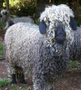 Natural-Fiber-wool