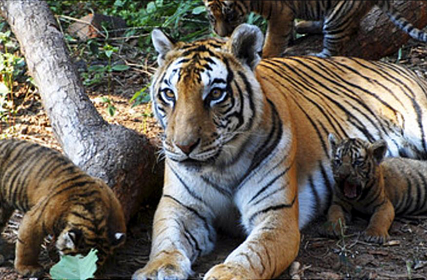 Wildlife-Protection-Society-of-India-(WPSI)