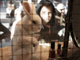 Animal testing in India