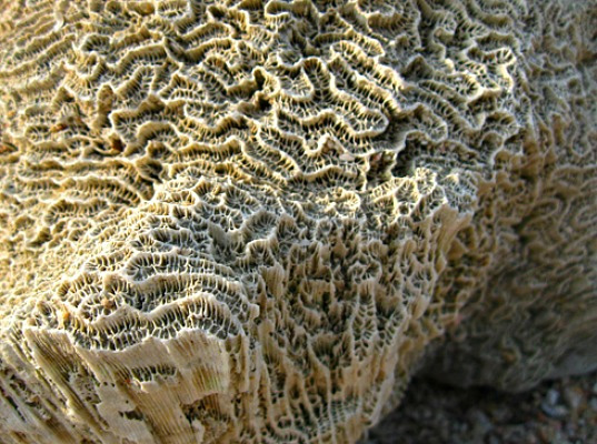 Biomimicry-Coral-effect-for-eco-friendly-cement