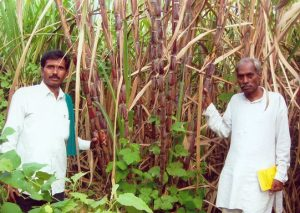 Natural-Farming-in-India-Subhash-Palekar