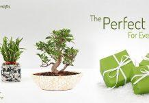 Nurturing Green Gift